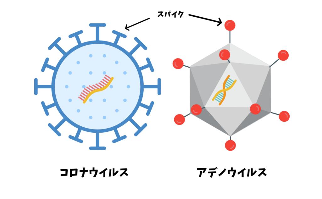アデノウイルスとコロナウイルスの紹介