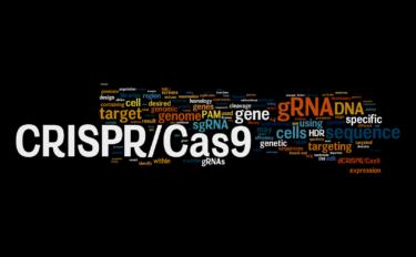 【図解】わかりやすいCRISPR-Cas9解説【基本編】