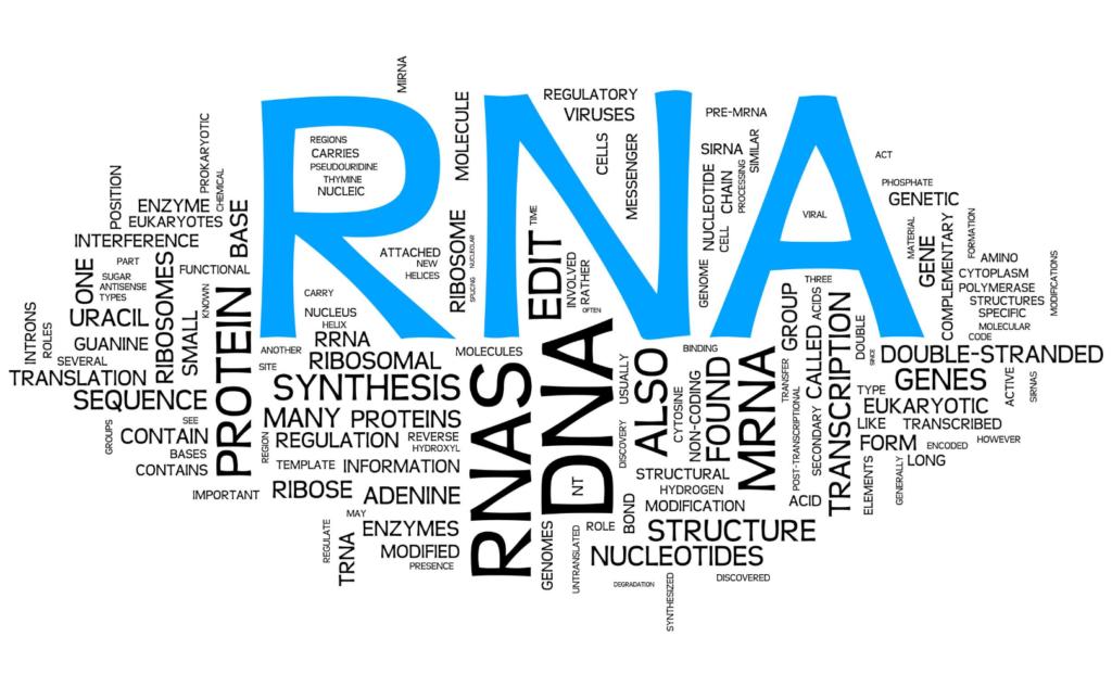 Light speedプログラムでは3系統4種類のmRNAワクチンを開発中